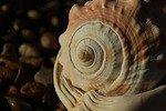 universal mind through seashell spiral